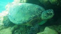 SeaFun Snorkel, Kauai, Snorkeling