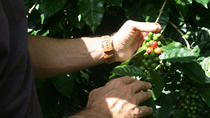 Coffee Tour from Managua, Managua, Coffee & Tea Tours