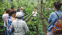 Coffee Tour from Managua, Managua, Coffee & Tea Tours