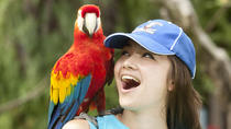 Discover Bali Bird Park, Ubud, Attraction Tickets