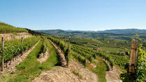 Amarone wine tasting experience at Cantine Tommasi from Verona, Verona, Wine Tasting & Winery Tours