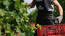 Amarone wine tasting in Verona at Cantine Tommasi, Verona, Wine Tasting & Winery Tours