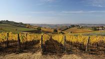 Chianti Classico Wine Tasting, Chianti, Wine Tasting & Winery Tours