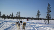 Private Dog Sledding Experience in Valtellina, Livigno & Bormio, Ski & Snow