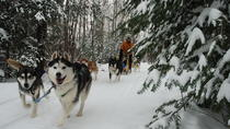 Private Sleddog Experience in the Alps, Piemonte och Ligurien