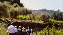 Valpolicella and Amarone wine tasting experience from Verona, Verona, Wine Tasting & Winery Tours