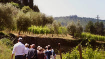 Valpolicella Wines and Amarone Wine Tasting in Verona, Verona, Wine Tasting & Winery Tours