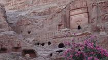 Private Tour Petra and Shobak Castle from Amman, Amman, Private Day Trips