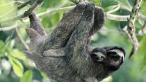 Sloth Encounter Tour and Waterfalls in the Rain Forest of Costa Rica, Liberia, Day Trips