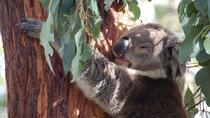 Phillip Island 3 Park Pass: Penguin Parade, Koala Conservation Centre and Churchill Island Heritage ...