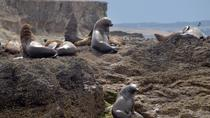 Phillip Island Wildlife Cruise with Optional Penguin Parade and 3 Park Pass, Phillip Island, Day ...