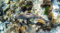 Full-Day Snorkel Trip to Koh Rok and Koh Haa by Speedboat from Phuket, Phuket, Snorkeling