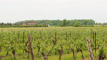 Full-Day Niagara Wine Tour with Lunch in Niagara-on-the-Lake and Optional Boat Ride, トロント