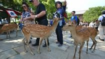 Private Excursion to Nara, Kyoto, Cultural Tours