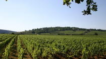 Private Tour: Full Day Wine Tasting Tour from Dijon, Dijon