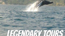 From Puerto Plata-Sousua Famous Whale Samana Cayo Levantado with Whale Biologist, Puerto Plata, Day...