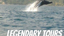 From Santo Domingo: Famous Whale Samana and Cayo Levantado Beach with Whale Biologist, Santo ...