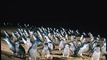 Full-Day Penguin Parade e Melbourne City Tour da Melbourne, Melbourne, Tour di una giornata