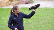 Healesville Sanctuary VIP Meet and Feed Day Trip from Melbourne, Melbourne, Nature & Wildlife