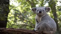 Melbourne Super Saver: City Sightseeing Tour and Phillip Island Penguin Parade plus Viewing Platform