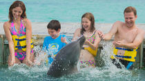 Dolphin Island Family Experience Program from Punta Cana, Punta Cana, Swim with Dolphins