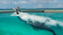 Royal Dolphin Swim Program in Punta Cana, Punta Cana, Swim with Dolphins