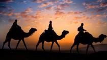 Sunset Camel Ride in the Palm Grove of Marrakech, Marrakech, Half-day Tours