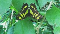Monteverde Butterfly Gardens Tour, Monteverde, Nature & Wildlife