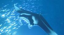 Manta Magic - Night Manta Ray Snorkel, Big Island of Hawaii, Snorkeling