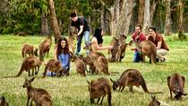 Full-Day Wildlife and Historic Hahndorf Tour from Adelaide, Adelaide, Day Trips