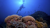 2 Tank Barrier Reef Dive di Hopkins, Hopkins
