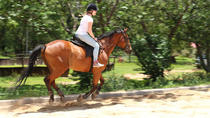 Jamaica Horseback Riding Adventure from Montego Bay, Montego Bay, Horseback Riding