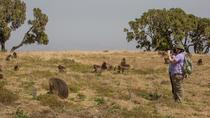 Guided Day Trip: Nature and Wildlife including Debre Libanos Monastery from Addis Ababa, Addis ...