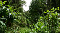 Guided Day Trip to the Lush Forest of Menagesha and Historic Town of Addis Alem, Addis Ababa, Day ...