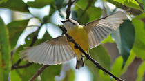 Birdwatching and Wildlife Noosa Biosphere Full-Day Experience, Noosa & Sunshine Coast, Nature & ...