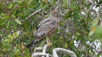Birdwatching and Wildlife Noosa Biosphere Half-Day Experience, Noosa & Sunshine Coast, Nature & ...