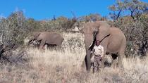 Elephant Walk 4-Hour Guided Tour from Johannesburg, Johannesburg, Nature & Wildlife