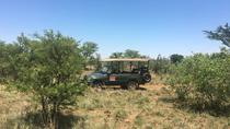 Half day safari tour from Johannesburg, Johannesburg, Day Trips