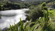Tuatara Wetlands Tour at Sanctuary Mountain, Hamilton, Nature & Wildlife