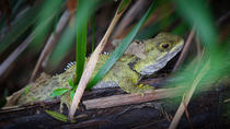 Tuatara Wetlands Tour at Sanctuary Mountain