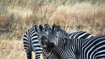 4 Days 3 Nights Safari Mikumi National Park from Zanzibar, Zanzibar City, Multi-day Tours
