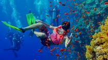 Half Day Zanzibar Mnemba Atoll Marine Reserve Snorkeling Tour, Zanzibar City, Snorkeling