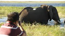 Chobe River Game Cruise, Kasane, Day Cruises
