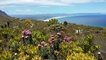 Wine & Fynbos Camminate nella bellissima Hemel & Aarde Valley di Overberg, Hermanus, Hermanus, Day Trips