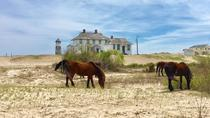 2-Hour Outer Banks Wild Horse Tour By Open-Air 4WD , Outer Banks, Nature & Wildlife