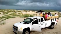Wild Horse Tour from Virginia Beach, Virginia Beach
