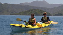 Half-Day Guided Sea Kayaking Tour from Anakiwa, Picton, Wine Tasting & Winery Tours