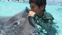 Stingray City Snorkel Tour, Cayman Islands, Swim with Dolphins