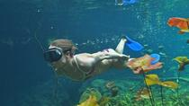 The Jaguar Path Adventure Tour: Cenotes, Snorkeling and Ziplining, Playa del Carmen, Snorkeling