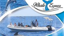 Tenerife Whale Watching Cruise, Tenerife, Dolphin & Whale Watching